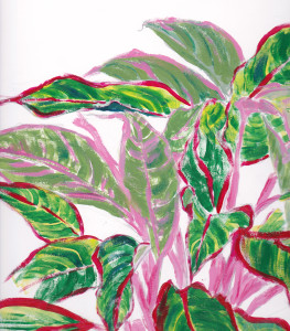 Aglaonema by Carol Hobbs