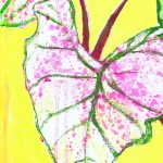 Caladium on Yellow by Carol Hobbs
